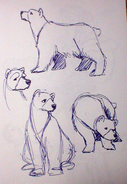 sb bears